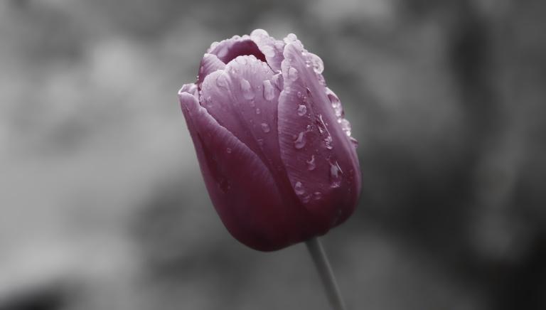flowerdrops