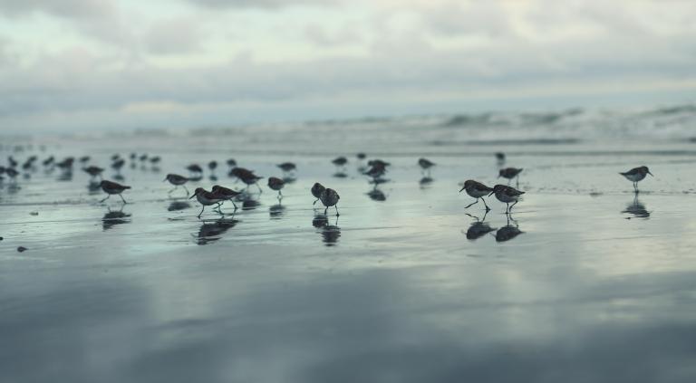birdsontheshore